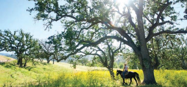 Santa Barbara Culinary Experience Partners with Julia Child Foundation