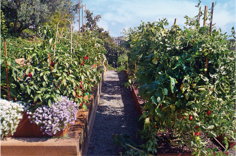 Mind Body and Soil — Improving Your Life Through the Garden
