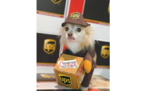 Courier Furrier Costume Contest 2019 Winner