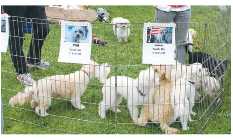 """Woofstock 90210 Returns to """"Wiggly Field"""" at Roxbury Park in Beverly Hills"""