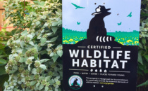 Two Certified Wildlife Habitats Created in WeHo