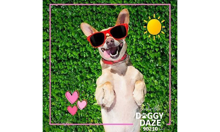 Voting Closes Feb. 15 for Doggy Daze Photo Contest