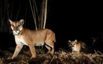 Annenberg Foundation Awards $25 Million Grant for Wildlife Crossing