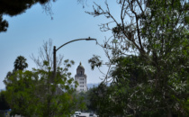 Change Proposed for Beverly Hills Trees in Face of Climate Change